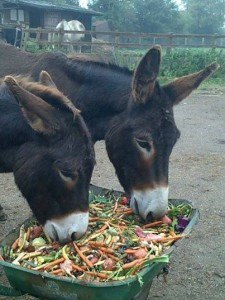 Donks eating